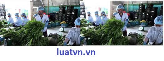 Thành lập công ty xuất nhập khẩu nông sản