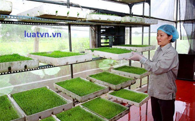 Thành lập công ty xuất khẩu nông sản