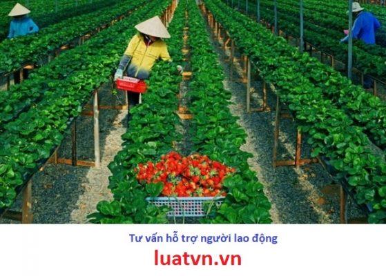 Đơn hàng nông nghiệp Nhật Bản dành cho nữ