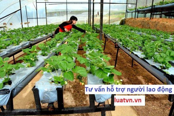 Đơn hàng trồng rau trong nhà kính