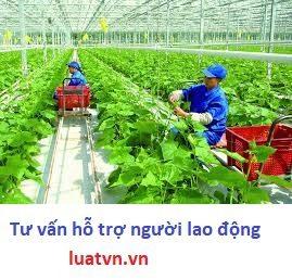 Xuất khẩu lao động Nhật Bản nông nghiệp
